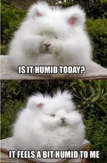 a-bit-humid-to-me